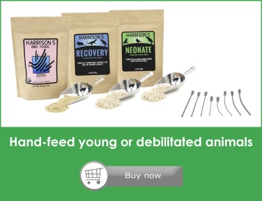 An advert for handfeeding food and equipment